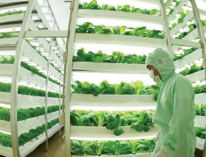 Vertical Farming: The Way to Feed a Global Population