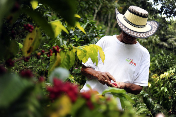 SAP Technology to Empower Small Coffee Farmers in Colombia