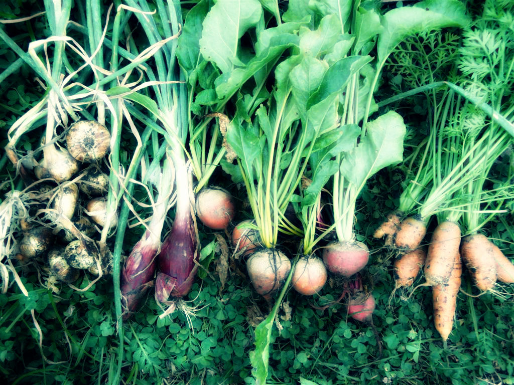 Social Enterprises Disrupting Conventional Food System to Make it More Sustainable